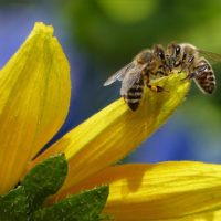 Bee and Pollinators Event – A Commonwealth Concern