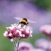 Bees and Pollinators: A Commonwealth Concern