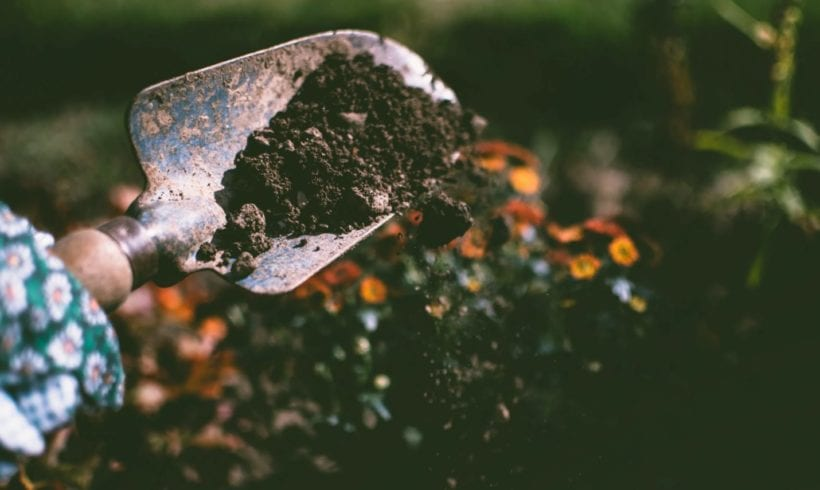 The Importance of Soil on Life