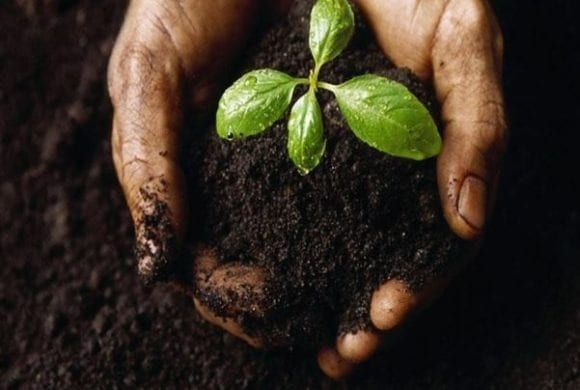 Soil – Its Impact on Life