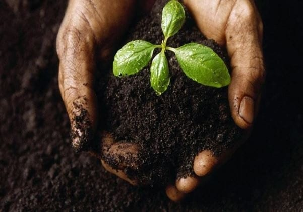Soil – It's Impact on Life