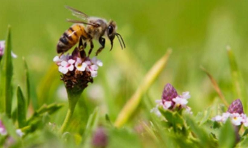 CHEC Bee and Pollinator Project