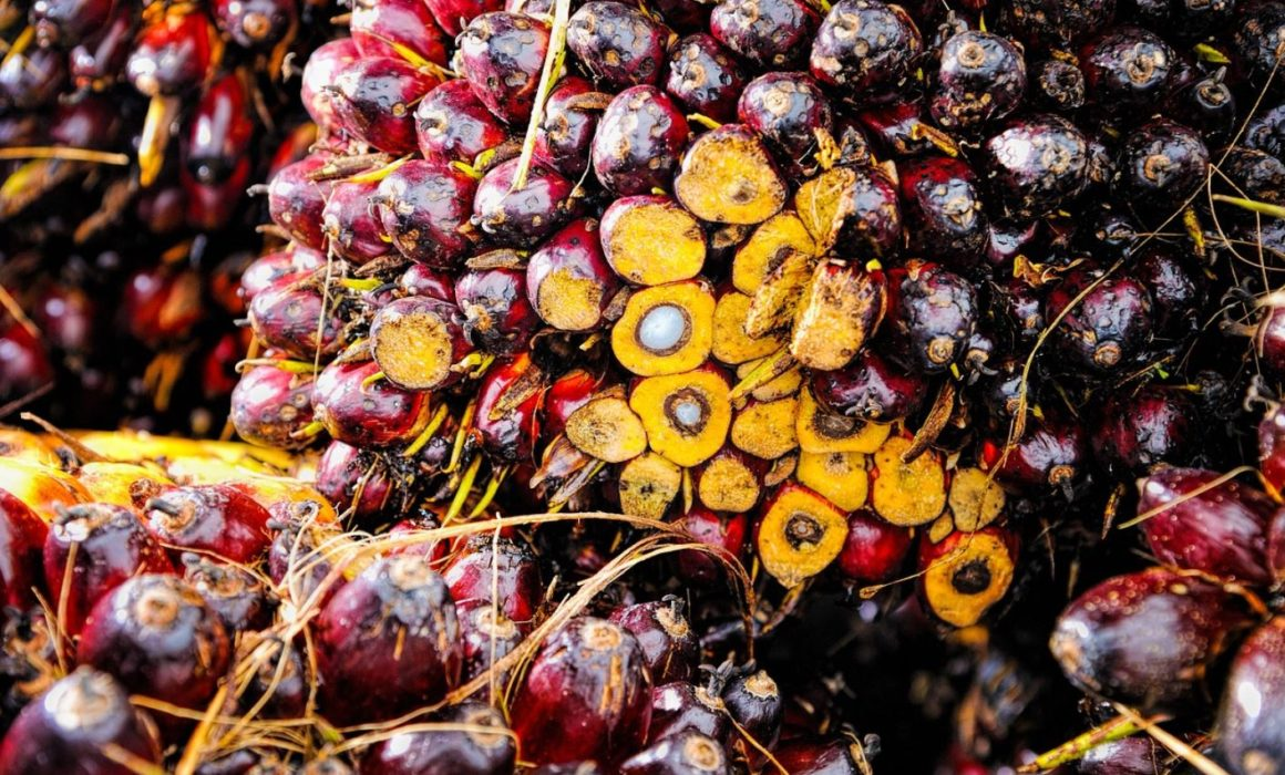 Image of Palm Oil Fruit