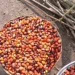 The Impact of Palm Oil on the Environment
