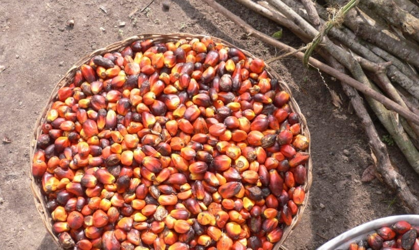 Palm Oil and its Impact on the Environment