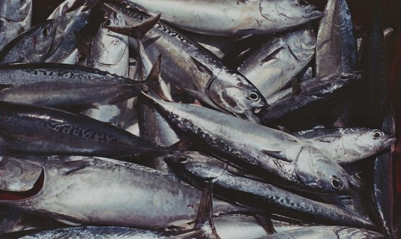Can we Eat Fish and Fight Climate Change?