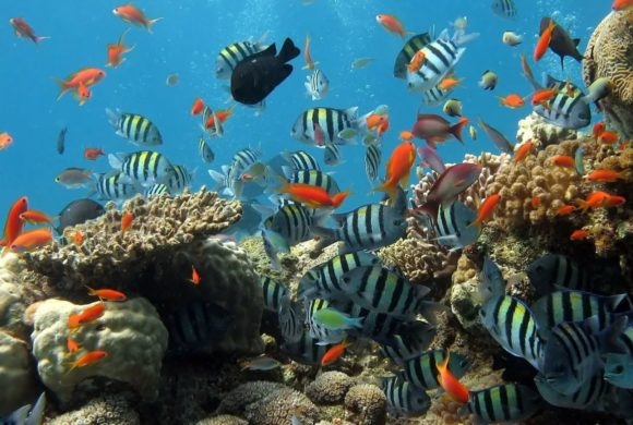 Draft 1 of the Post-2020 Global Biodiversity Framework Launched